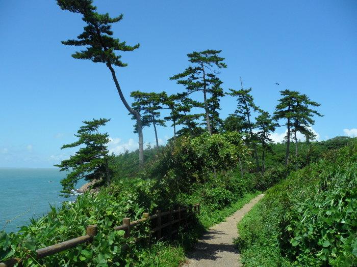 A very green path